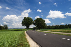 Two trees. Bordering a countryside road on a beautiful day in springtime Royalty Free Stock Images
