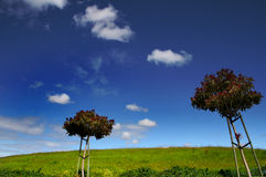 Two trees. Green hill and blue sky Royalty Free Stock Photo