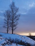 Two trees. Winter. Two trees grow on a hill Royalty Free Stock Images