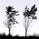 Two trees Stock Photography