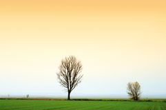 Two trees. Horizon with two trees and orange sky Royalty Free Stock Photos