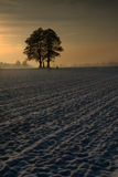 Two trees on the acre Stock Photography