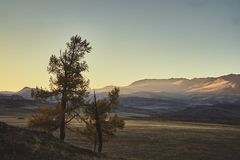 Two trees against the backdrop of the mountain landscape of the autumn Altai royalty free stock image