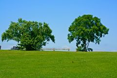 Two Trees Against blue sky with green grass and lots of open space, small robin in mid-ground. Two magnificent tress against a blue sky with lots of green grass royalty free stock images