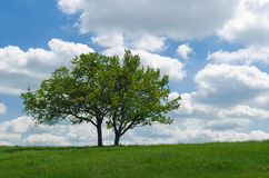 Two trees against the sky with clouds. You see two trees in the meadow, in the background the sky with clouds. Time of year - summer Royalty Free Stock Image