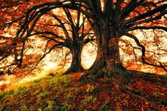 Two Trees during Autumn royalty free stock image