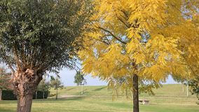 Two trees in autumn. Two different trees next to each other Stock Photography