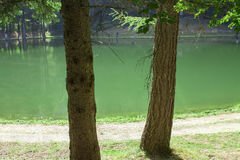 Two trees on the background of a mountain lake Royalty Free Stock Photography