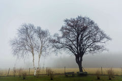 Two trees with benches in morning fog Royalty Free Stock Image