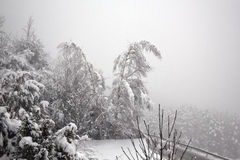 Two trees bending under the falling snow Stock Photo