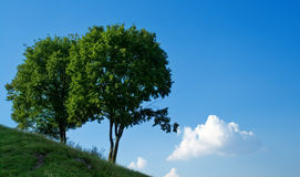 Two trees and blue sky Stock Images