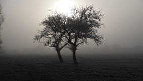 Twin trees in the frost. Two trees in the british countryside at sunrise after a widespread hard frost Royalty Free Stock Images