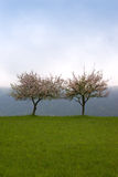 Two Trees on a Cloudy Gray Day. Two Trees in Spring on a Cloudy Gray Day Royalty Free Stock Image