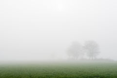 Two trees in a dense fog Stock Photo