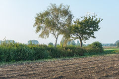 Two trees beside the edge of a corn stubble field Stock Photography