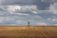 Two trees in the field Royalty Free Stock Photos