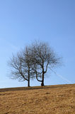 Two trees in a field Royalty Free Stock Image