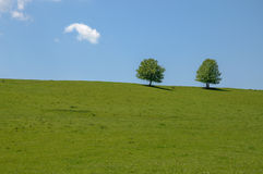Two trees in a field with blue sky Stock Photography