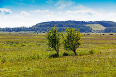 Two trees in a field in sunshine Royalty Free Stock Photos