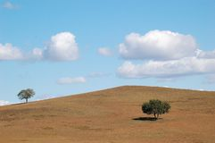 Two trees in the field under cloud and blue sky. Two trees in an autumn field under blue sky with clouds royalty free stock photography