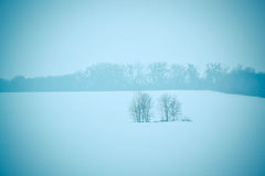 Two trees in the field winter Royalty Free Stock Photo