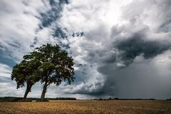 Two trees in a fields in front of dark stormy cloud royalty free stock photography
