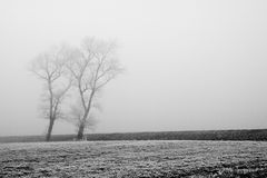 Two trees in the fog Royalty Free Stock Images