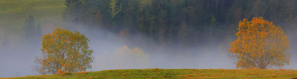 Two trees and fog. Golden Autumn landscape Stock Photo