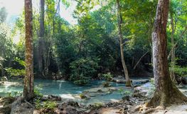 Two trees frame water with very clear water showing tree roots in the dense forest of Erawan National park in Thailand royalty free stock image