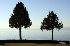 Two trees in front of the Teahouse in Staney PArk. Vancouver Royalty Free Stock Photography