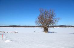 Two trees in the frozen lake Royalty Free Stock Photo