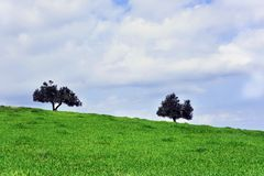 Two trees on a green meadow with blue sky, landscape royalty free stock photos
