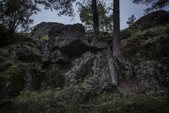 Two trees growing from dark boulders covered in moss stock photos