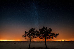 Two trees are growing together on the background of the star Royalty Free Stock Photos
