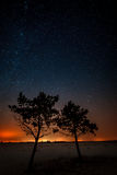 Two trees are growing together on the background of the star Stock Photos