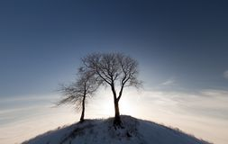 Two Trees on Hill Royalty Free Stock Images