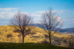 Two trees on a hill Stock Photos