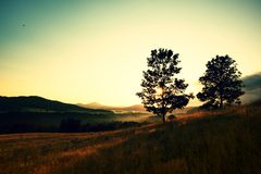 Two trees on hill. Sunrise Landscape.Early Morning In Meadow. Royalty Free Stock Photography