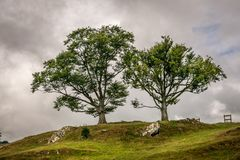 Two trees on the horizon, surrounded by rain clouds. stock images