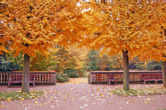 Free Two Trees In Autumn Stock Image - 3543181