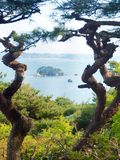 Two trees and island in Japan stock photography