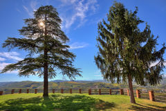 Two trees on the lawn. Piedmont, Italy. Stock Photos