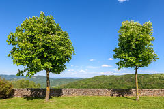 Two trees on the lawn under blue sky. Royalty Free Stock Image
