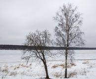 Two trees without leaves on the background of a frozen river stock photo