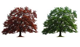 Two trees in line Royalty Free Stock Images