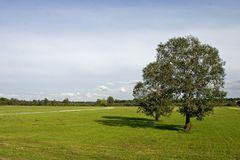Two trees on meadow. With path and partially cloudy sky Royalty Free Stock Photo