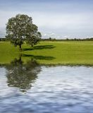 Two trees on meadow. With water reflection Stock Photography