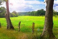 Two trees and a meadow in the background Royalty Free Stock Photos
