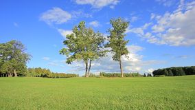 Two trees in a meadow. Two trees on the background field with green grass and blue sky stock video