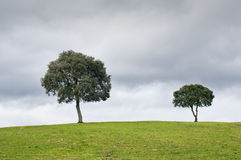 Two trees in the meadow, with a cloudy sky Stock Photography